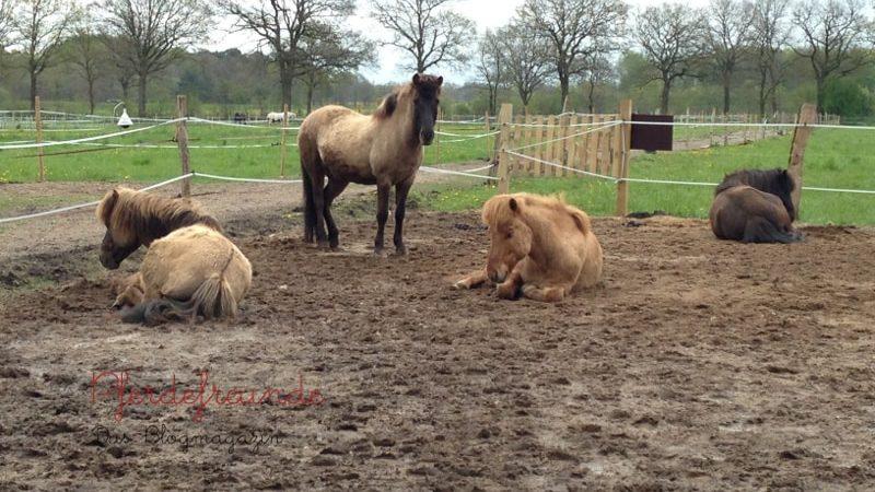 Harmonische Pferdeherde