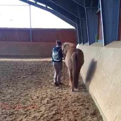 Bodenarbeit mit Pferd und Baby